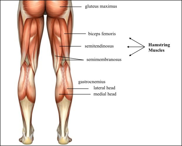 Fitness Physio Blog Hamstring Injuries